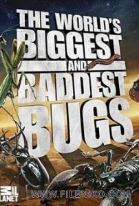 دانلود مستند World Biggest and Baddest Bug بزرگترین و بدترین حشرات جهان مالتی مدیا مستند