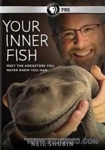 دانلود مستند PBS: Your Inner Fish 2014 ماهی درونی شما با زیرنویس فارسی مالتی مدیا مستند مطالب ویژه