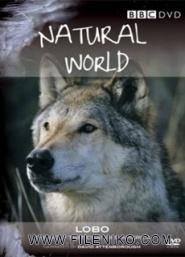 دانلود مستند A Wolf Called Storm  2012 گرگی به نام توفان با دوبله فارسی مالتی مدیا مستند