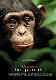 دانلود فیلم مستند Chimpanzee 2012 با دوبله فارسی مالتی مدیا مستند