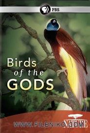 دانلود مستند Birds of the Gods 2011 پرندگان بهشتی با دوبله فارسی مالتی مدیا مستند
