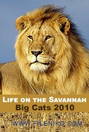 دانلود مستند گربه های بزرگ – Life on the Savannah: Big Cats 2010 مالتی مدیا مستند