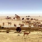 دانلود مجموعه مستند Africa 2013 آفریقا دوزبانه دوبله فارسی+انگلیسی مالتی مدیا مستند