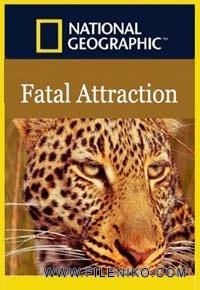 دانلود مستند Fatal Attraction 2015 گیرایی مرگبار مالتی مدیا مستند
